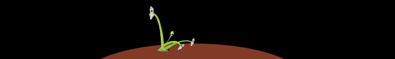 Website Launch Monster